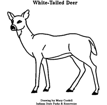 Deer Coloring Page  Coloring Page