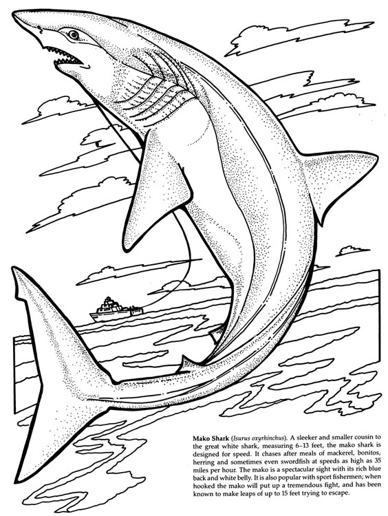 Candid image throughout shark coloring pages printable